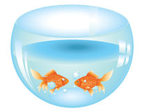 Gold Fish in Aquarium. Cartoon gold fish swimming in the water in a fishbowl Royalty Free Stock Image