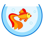 Gold fish in aquarium. Illustration of the cartoon gold fish in aquarium Royalty Free Stock Photo