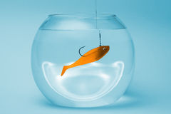 Gold fish bait in a bowl. Gold fish bait with a big hook in a bowl Royalty Free Stock Photo