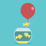 Gold fish, balloon, fishbowl Royalty Free Stock Photography
