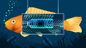 Gold fish behind an X-ray screen showing a plastic bottle inside the fish`s stomach in a blue underwater background contaminated. With bottles and pieces of