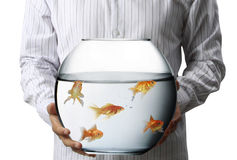 Gold Fish in the bowel Stock Photo