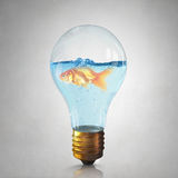 Gold fish in bulb . Mixed media stock photo