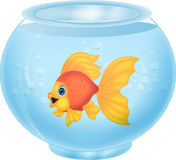 Gold fish cartoon in aquarium Royalty Free Stock Photos