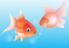 Gold fish Stock Image