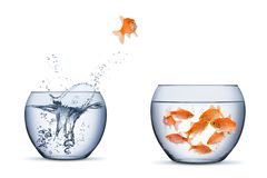 Gold fish change move retrun separartion family teamwork concept jump into other bigger bowl isolated background. Gold fish change move retrun separartion family stock photos