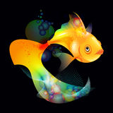Gold fish Royalty Free Stock Photography