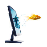 Gold fish and computer monitor