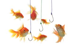 Gold fish and empty hooks royalty free stock image