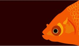 Gold Fish Face with blank space for message or object clean plain vector. Illustration cartoon Royalty Free Stock Photos