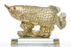 Gold Fish Feng shui Stock Images