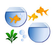 Gold Fish and Fish Bowl Royalty Free Stock Images