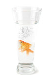 Gold fish at glass Royalty Free Stock Photo
