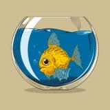 Gold fish. In glass aquarium Royalty Free Stock Photo