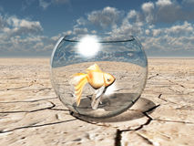 Gold fish in glass bowl in desert Stock Image