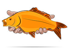 Gold fish in a hands. Royalty Free Stock Photography