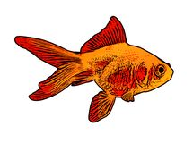 Gold fish illustration Stock Photography