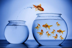 Gold Fish. Jumping from one bowl to another Royalty Free Stock Images