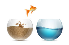 Gold fish jumping out of the aquarium. Aquariums with sand and w Stock Images