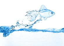 Gold fish jumping over slash blue water Stock Photography