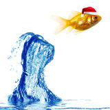 Gold fish jumps over water. A gold fish wearing a red Santa Claus hat jumping over a wave of water, white background Stock Images