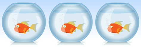 Gold Fish Life And Times In Aquarium Stock Images