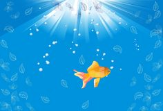 Gold fish,. Lonely goldfish in the depths of the ocean Stock Photography