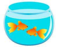 Gold fish. Pair of gold fish in the aquarium. Vector illustration Stock Photo