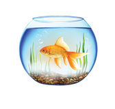 Gold fish in a Round aquarium, fish bowl. Gold fish Round aquarium. illustration on white background Royalty Free Stock Images