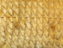 Gold fish scales Stock Images