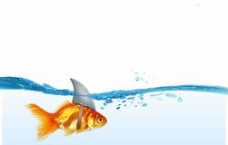 Gold fish with shark flip . Mixed media stock image