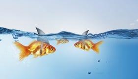 Gold fish with shark flip . Mixed media royalty free stock photos