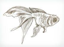 Gold fish sketches Royalty Free Stock Photo