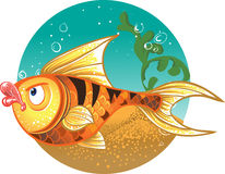 Gold Fish with striped tiger color royalty free stock photography