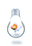 Gold fish swiming in light bulb Royalty Free Stock Images
