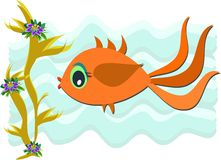 Gold Fish Swimming Stock Image