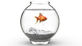 Gold fish swimming in a fishbowl. Isolated on white background Royalty Free Stock Image