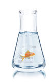 Gold fish in test tube Royalty Free Stock Images