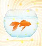 Gold fish in a transparent aquarium vector illustration. Gold fish in a transparent aquarium isolated on white background Royalty Free Stock Photo