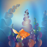Gold Fish Underwater Royalty Free Stock Images