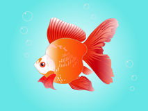 Gold Fish Vector Stock Photo