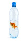 Gold fish at water bottle Stock Photo
