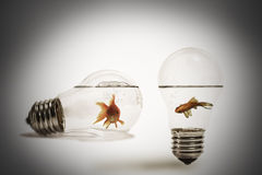 Gold fish in water. Inside an electric light bulb Stock Photo