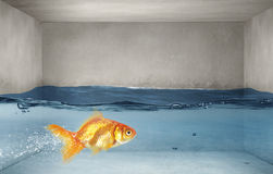 Gold fish in water . Mixed media stock image