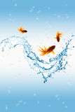 Gold fish and water splash Stock Photography