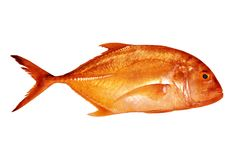 Gold fish. With white background Stock Image