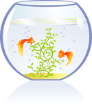 Gold fishes in aquarium Royalty Free Stock Photography