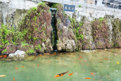 Gold fishes near embankment of Yi river in Longmen Royalty Free Stock Images