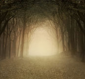 Gold foggy forest Royalty Free Stock Photo