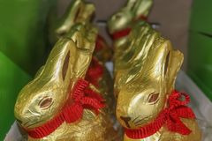 Gold foil covered chocolate bunnies with red bows around their necks sitting in a row in a green box for Easter